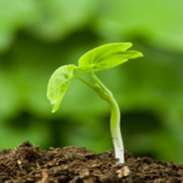 Conférence horticulture : Partir ses semis à la maison, c'est facile!