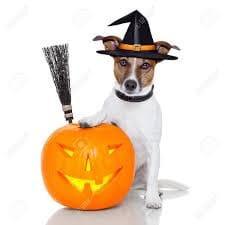 Spécial Halloween : Les animaux qui se déguisent