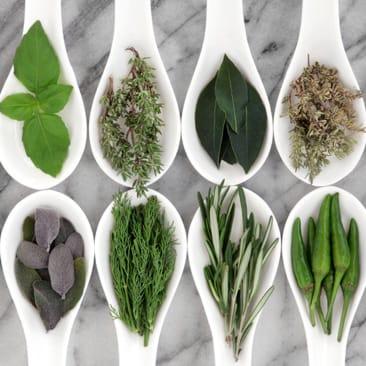 Conférence herboristerie : Les vertus des fines herbes