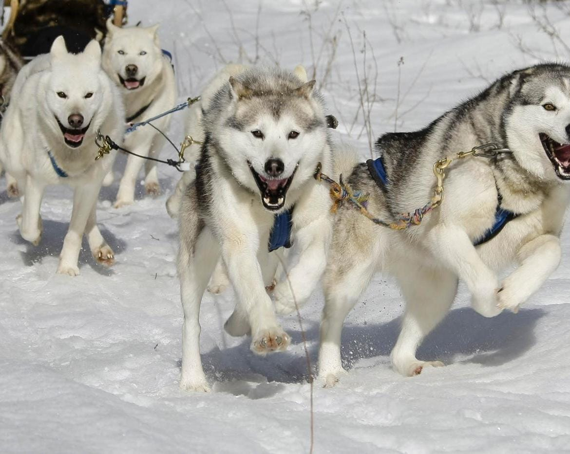 Dogsledding with Mohigan Aventures