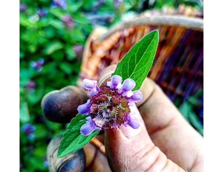 Herboristerie Apoteka, ``À la découverte du monde magique des plantes``