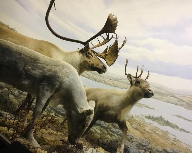 Pavillon de la faune